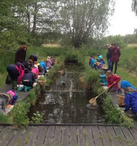 Wicken Fen pond dipping